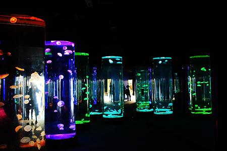 近未来的な水槽の水族館