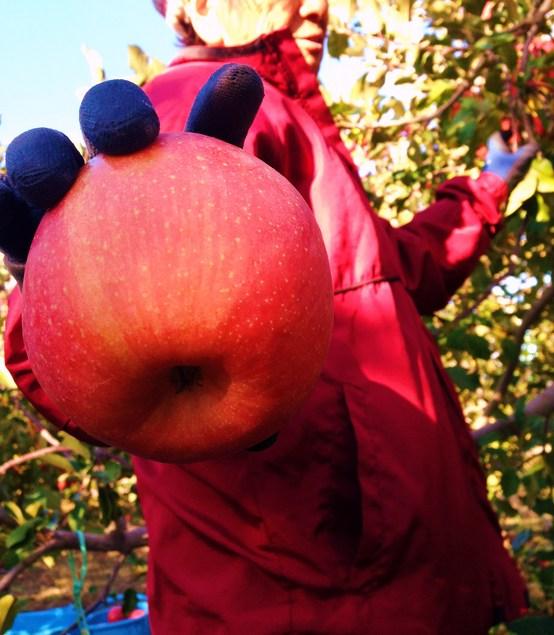 いいりんご.JPG