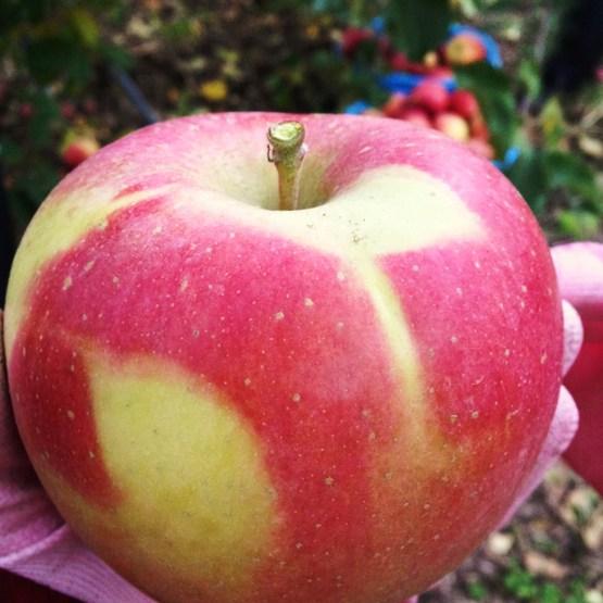 りんごあーと.JPG